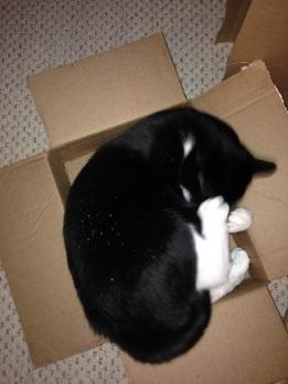 Billysky in a Box