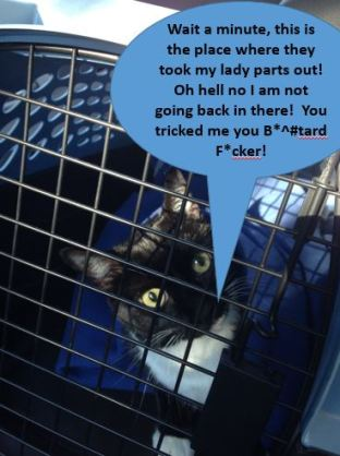 billysky-goes-to-cats-on-veterinary-2