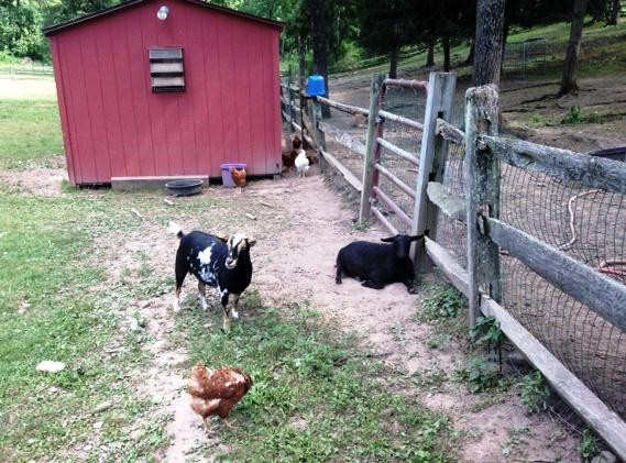 back yard farm