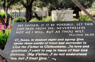 Biblical quote in the garden of Gethsemane