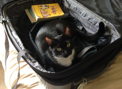 Billysky cat goes on a trip