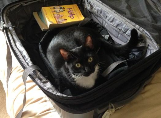 Billysky cat goes on a trip