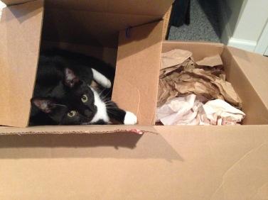 Billysky cat in a box