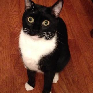 Billysky cat says hello