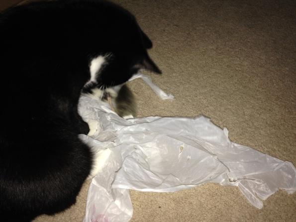 Billysky cat with bag