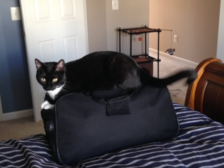 Billysky cat wont let me pack