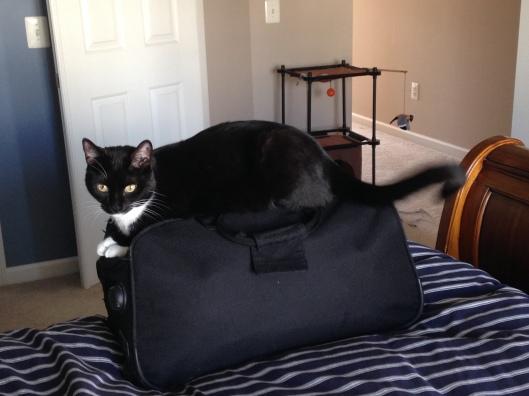Billysky cat wont let me pack