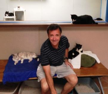 dog and kitty city dallas 2