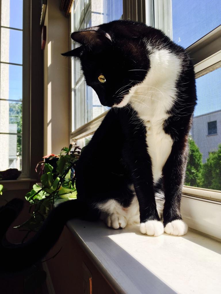 Billysky cat