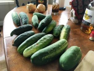 cucumbers 5