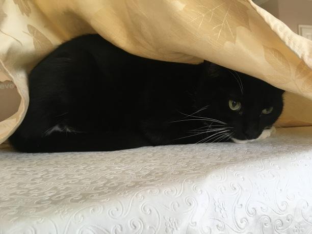 My scared cat