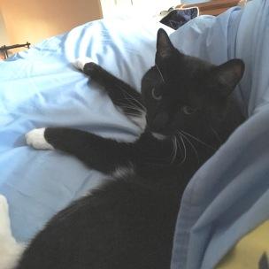 billysky cat goodmorning