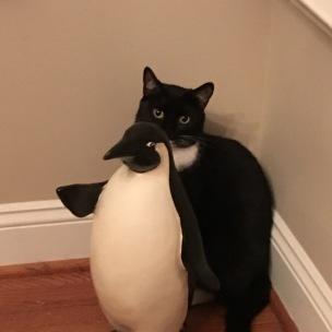 Tuxedo Cat hides behind Penguin