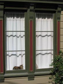 San Francisco Cat in a Window
