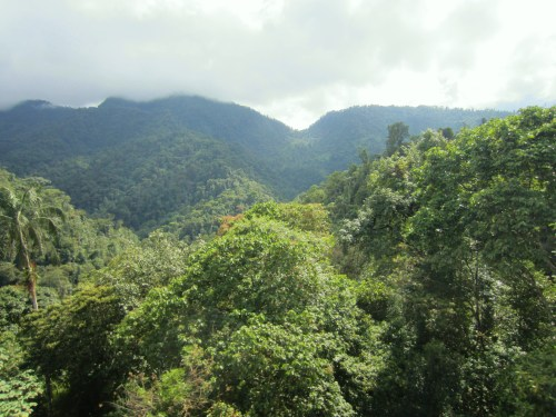 cloud forest 3