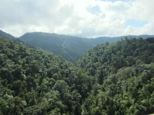 cloud forest 4