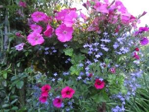 butchart garden 6