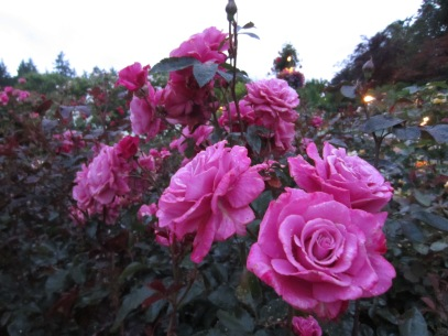 butchart garden 9