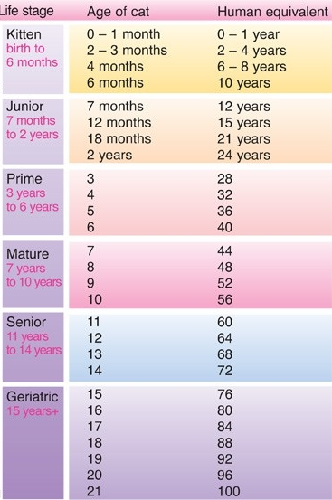 cats age in human years