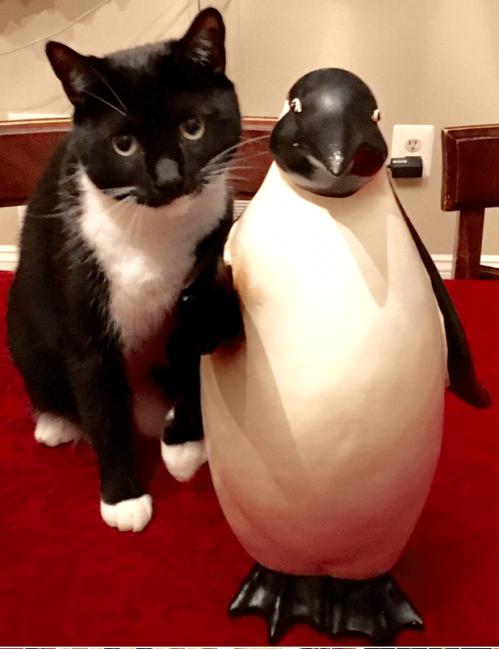 Tuxedo cat with penguin