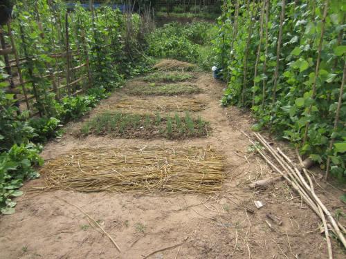 Laos Garden