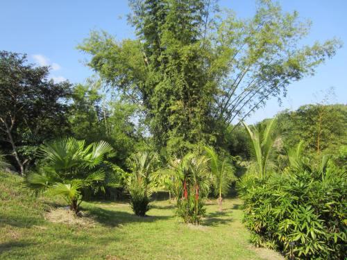 Pha Tad Ke Botanical Garden Bamboo